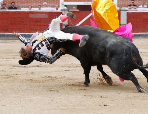 Bull, Sport venue, Entertainment, Bullring, Bovine, Pink, Tradition, Animal sports, Interaction, Performance,