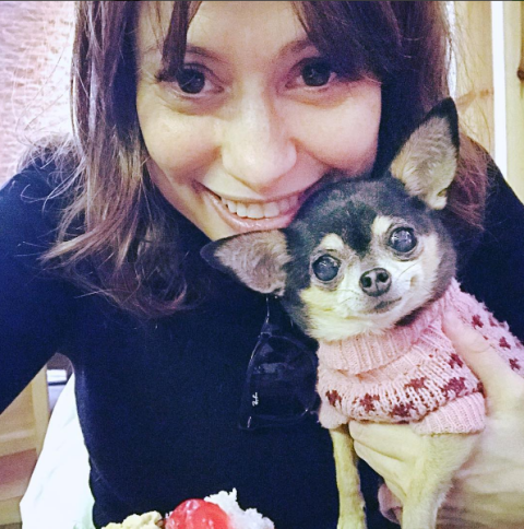 Stuffed toy, Selfie, Carnivore, Chihuahua, Snout, Eyelash, Dessert, Tooth, Rose family, Sweetness,