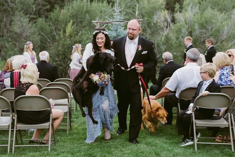 Dog breed, Chair, Furniture, Carnivore, Formal wear, Dog, Ceremony, Folding chair, Sporting Group, Canidae,