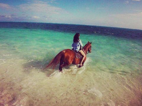 Human, Horse, Sorrel, Working animal, Ocean, Ecoregion, Horse tack, Liver, Horse supplies, Sea,