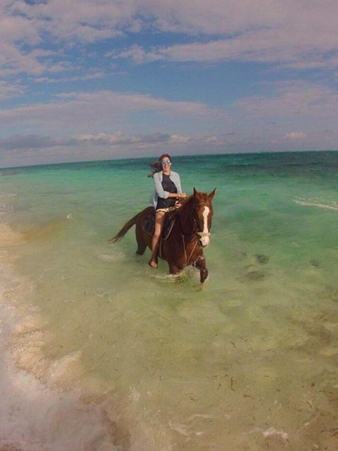 Horse, Working animal, Trail riding, Horse tack, Horse supplies, Vacation, Rein, Bridle, Sorrel, Ocean,