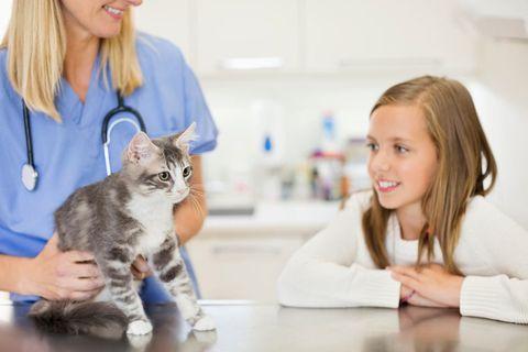 cuidados mascotas en casa