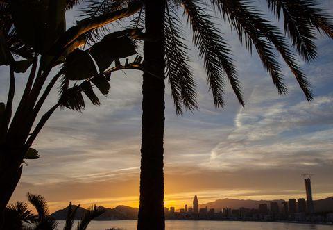 Sky, Cloud, Dusk, Sunset, Sunrise, Horizon, Afterglow, Woody plant, Evening, Arecales,