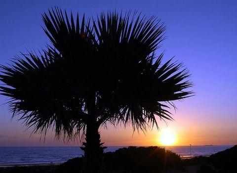 Dusk, Horizon, Sunset, Evening, Sunrise, Woody plant, Sunlight, Trunk, Tints and shades, Arecales,