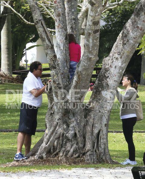 Tree, Trunk, Branch, Woody plant, Walking, Plant, Grass, Jogging, Trunk, Recreation,