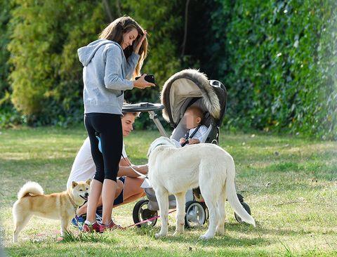 Dog, Mammal, Vertebrate, Canidae, Dog breed, Carnivore, Companion dog, Sporting Group, Dog walking, Obedience training,