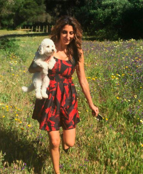Canidae, Grass, Dog, Companion dog, Summer, Long hair, Dress, Leg, Meadow, Plant,
