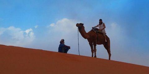 Camel, Desert, Arabian camel, Camelid, Natural environment, Sand, Dune, Aeolian landform, Sahara, Erg,