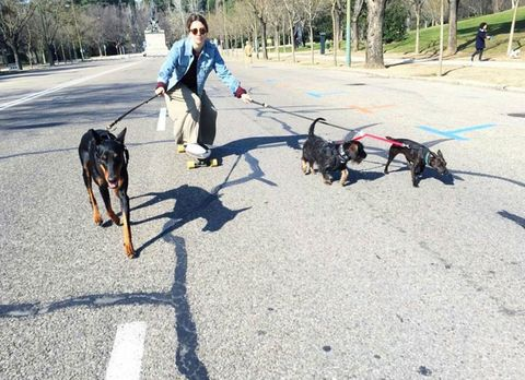 Dog, Canidae, Leash, Dog breed, Manchester terrier, Carnivore, Working dog, Sporting Group, Transylvanian hound, Toy manchester terrier,