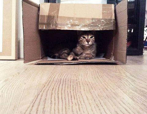 Cat, Floor, Felidae, Whiskers, Small to medium-sized cats, Wood, Flooring, Hardwood, Wood flooring, Laminate flooring,