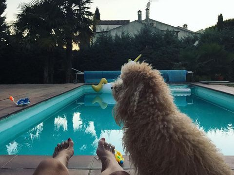 Leisure, Swimming pool, Fun, Summer, Canidae, Sporting Group, Vacation, Companion dog, Water park, Labradoodle,