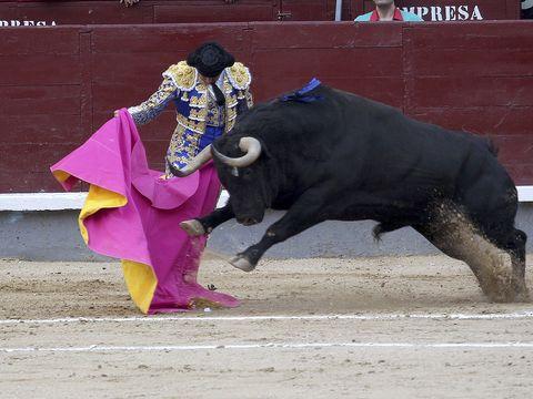 Matador, Bullfighting, Bull, Mammal, Bovine, Sport venue, Vertebrate, Bullring, Animal sports, Entertainment,