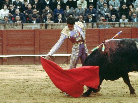 Matador, Bull, Animal sports, Sport venue, Bullfighting, Bullring, Bovine, Entertainment, Public event, Performance,