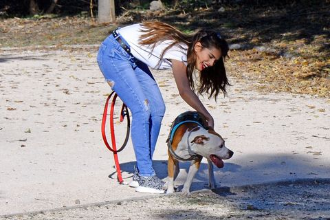 Dog, Canidae, Leash, Dog breed, Fun, Dog walking, Carnivore, Sporting Group, Photography, Jeans,