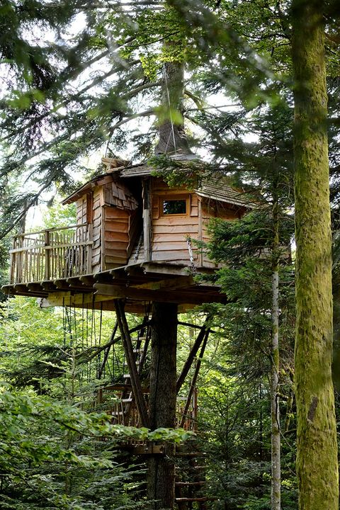 Tree house, Tree, House, Jungle, Forest, Building, Shack, Plant, Old-growth forest, Tree stand,
