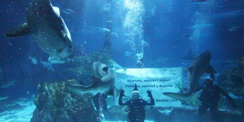 Underwater, Marine biology, Aquarium, Organism, Fish,