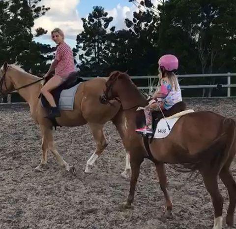 Horse, Halter, Mammal, Bridle, Rein, Vertebrate, Horse supplies, Animal sports, Horse tack, Equestrianism,
