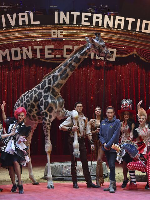 Performance, Circus, Event, Performing arts, Giraffidae, Giraffe, Animal training, Fawn, Musical,