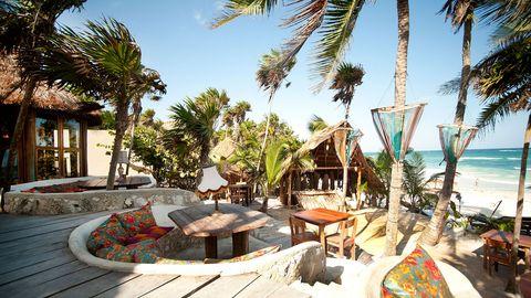 Resort, Tree, Arecales, Woody plant, Vacation, Tropics, Shade, Beach, Outdoor furniture, Caribbean,