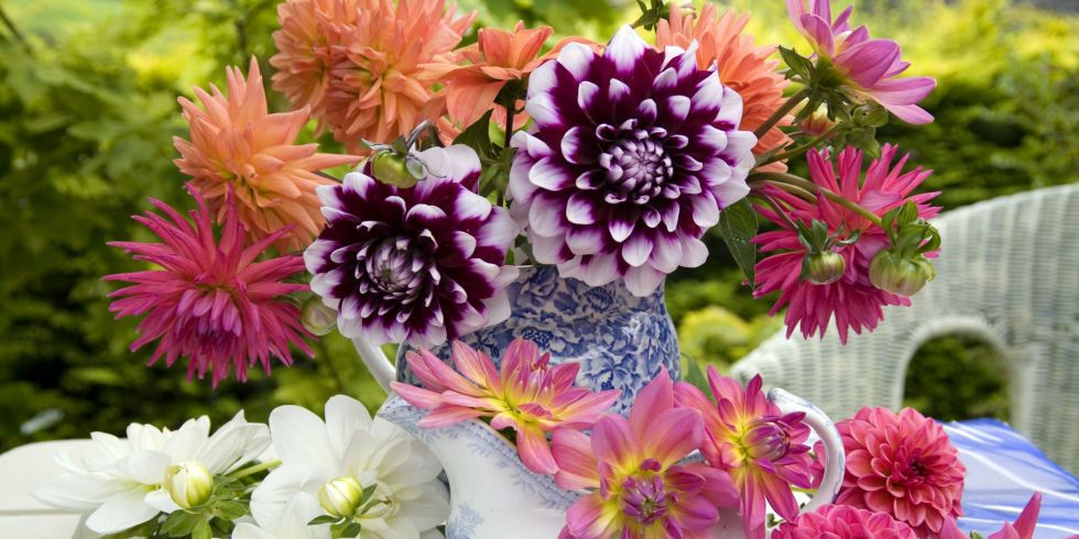 The Most Popular Flowers For Each Month Of Summer
