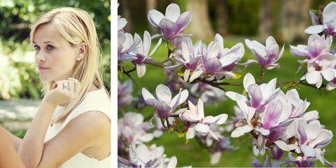 Nature, Petal, Flower, Purple, Lavender, Spring, Beauty, Blond, Violet, Photography,