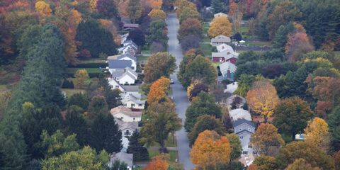 Vegetation, Leaf, Tree, Landscape, Deciduous, Woody plant, Aerial photography, Autumn, Biome, Roof,