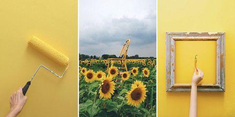 Yellow, Sunflower, Photograph, Flower, Petal, Field, Plantation, Agriculture, Flowering plant, Beak,
