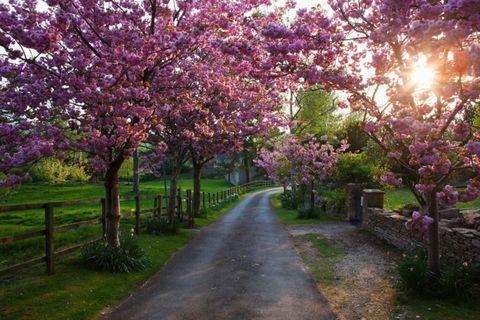 Nature, Branch, Plant, Petal, Flower, Purple, Leaf, Tree, Shrub, Garden,