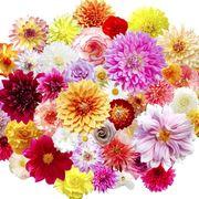 Petal, Yellow, Flower, Purple, Magenta, Floristry, Floral design, Flower Arranging, Cut flowers, Violet,