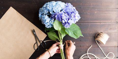 Blue, Flower, Purple, Petal, Flowering plant, Lavender, Annual plant, Hydrangeaceae, Cut flowers, Still life photography,