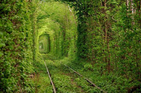 Vegetation, Grass, Track, Arch, Forest, Shrub, Terrestrial plant, Woodland, Hedge, Northern hardwood forest,