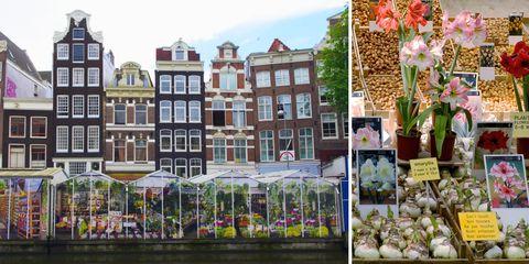 Petal, Facade, Flowerpot, Purple, Flowering plant, Lavender, Floristry, Produce, Mixed-use, Flower Arranging,