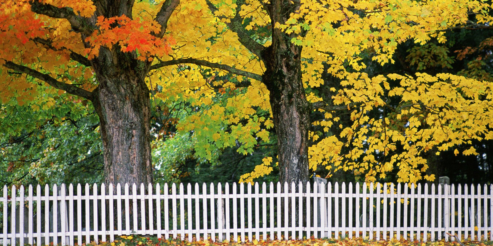 10 Things Pro Landscapers Do To Their Yards Every Fall
