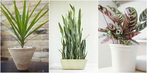 10 Houseplants That Can Survive Even The Darkest Corner