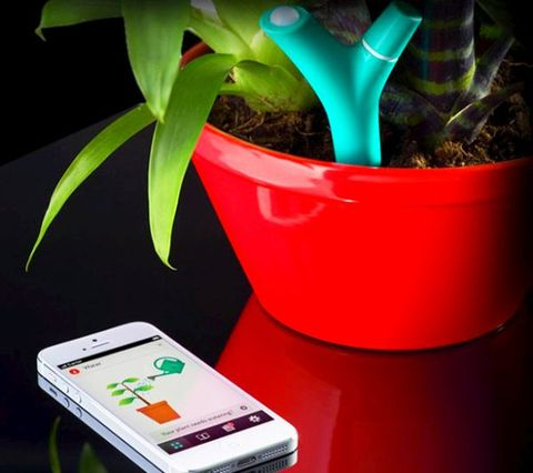 Electronic device, Display device, Technology, Flowerpot, Gadget, Terrestrial plant, Communication Device, Portable communications device, Mobile device, Houseplant,