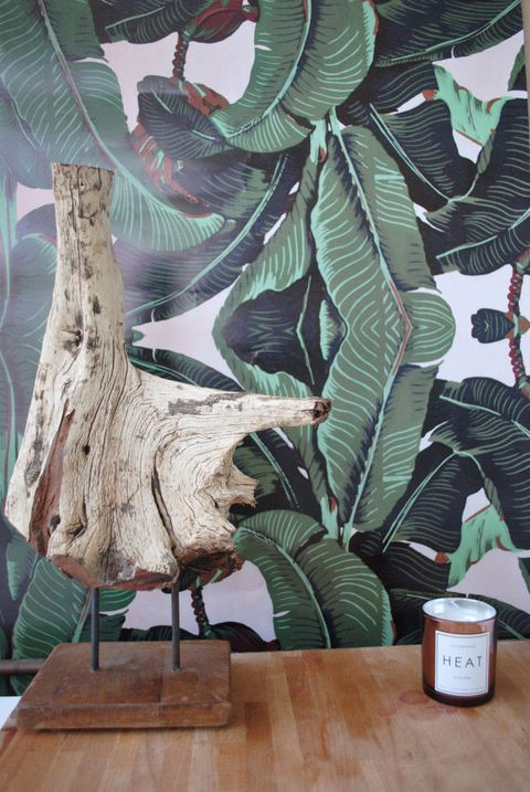 Wood, Woody plant, Trunk, Terrestrial plant, Wood stain, Plywood, Coffee cup, Cup,