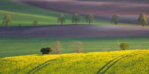 Agriculture, Farm, Field, Plain, Landscape, Plantation, Grassland, Rural area, Meadow, Crop,