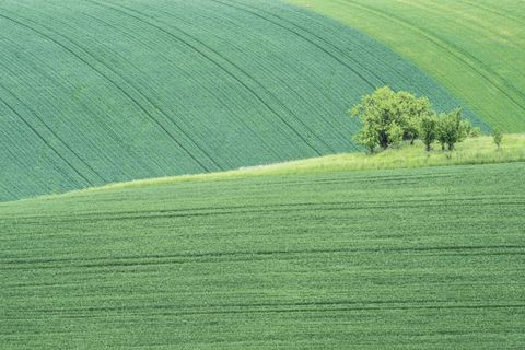Green, Grass, Natural environment, Leaf, Agriculture, Field, Landscape, Plain, Grassland, Land lot,