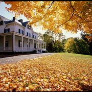 Deciduous, Yellow, Leaf, Tree, House, Building, Autumn, Amber, Real estate, Residential area,