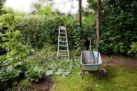 Shrub, Wheelbarrow, Garden, Cart, Groundcover, Ladder, Backyard, Yard, Perennial plant, Subshrub,