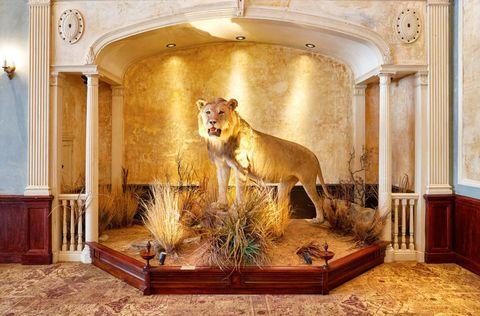 Big cats, Interior design, Felidae, Wall, Room, Terrestrial animal, Carnivore, Lion, Art, Interior design,