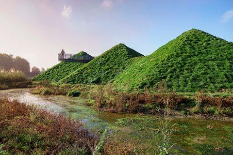 Vegetation, Grass, Natural landscape, Landscape, Rural area, Shrub, Bank, Slope, Grass family, Grassland,