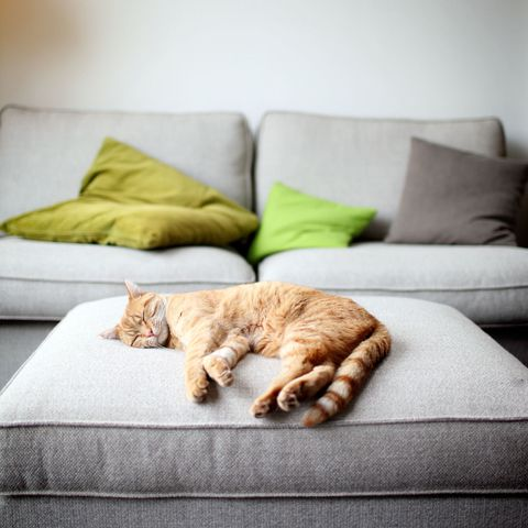 Room, Comfort, Carnivore, Felidae, Cat, Small to medium-sized cats, Wall, Interior design, Couch, Living room,