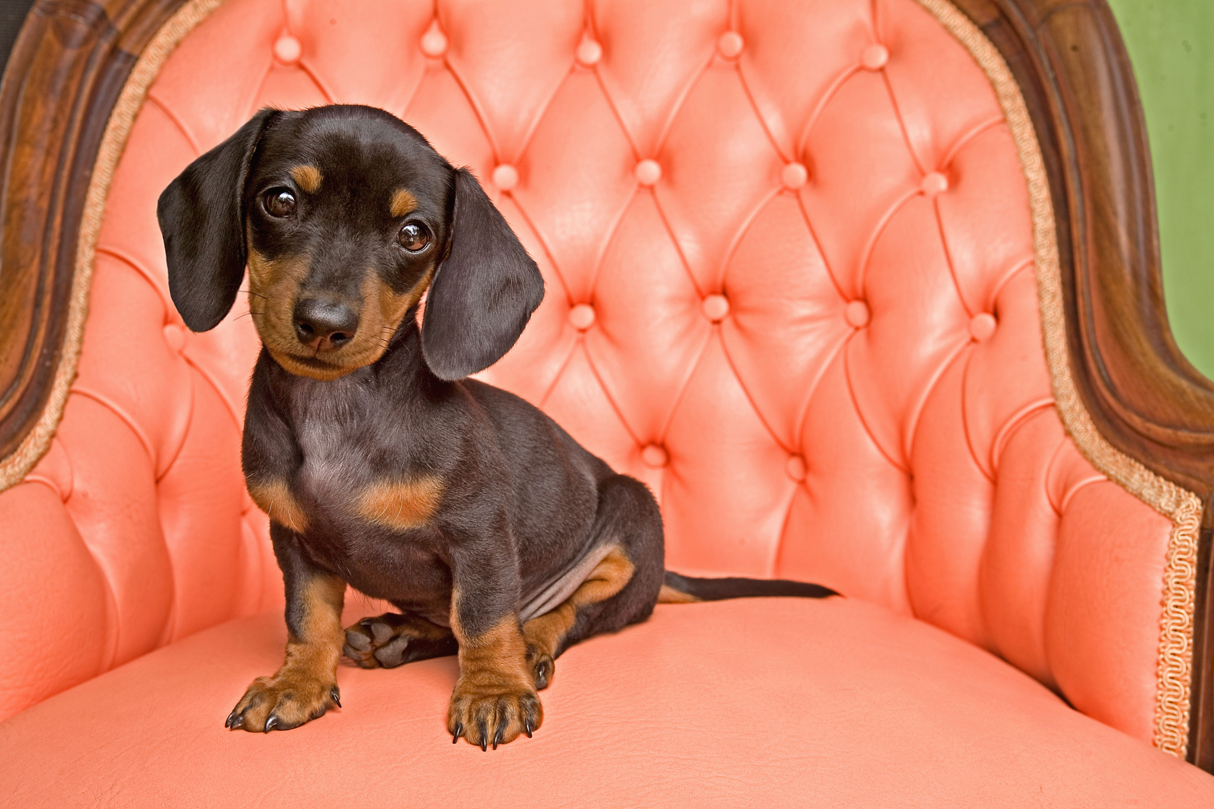 11 Of The Best Dogs For Apartment Dwellers