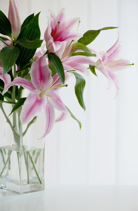 Petal, Flower, Pink, Cut flowers, Flowering plant, Floristry, Vase, Flower Arranging, Botany, Artifact,