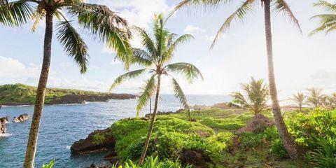 Vegetation, Nature, Sky, Plant, Tree, Landscape, Arecales, Coastal and oceanic landforms, Woody plant, Bank,