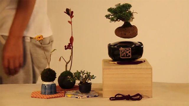 Floating Bonsai Trees Are A Thing You Never Knew You Needed