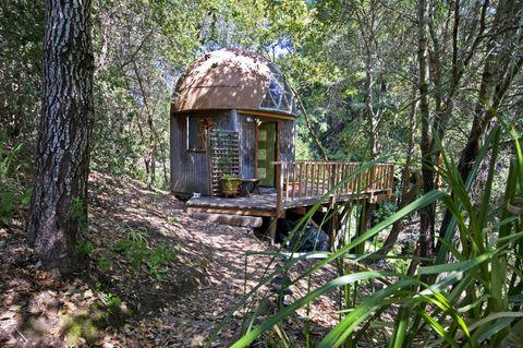 Vegetation, Wood, Natural environment, Plant community, Forest, Nature reserve, Terrestrial plant, Jungle, Biome, Trunk,
