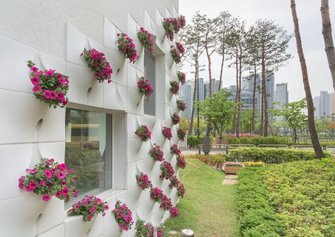 Petal, Flower, Pink, Shrub, Garden, Tower block, Magenta, Yard, Park, Annual plant,