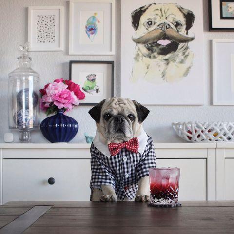 Vertebrate, Dog, Room, Carnivore, Dog breed, Pink, Interior design, Dog supply, Interior design, Snout,